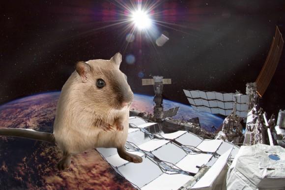 筋肉を強化したマイティー・マウスが宇宙から地球に帰還(NASA)