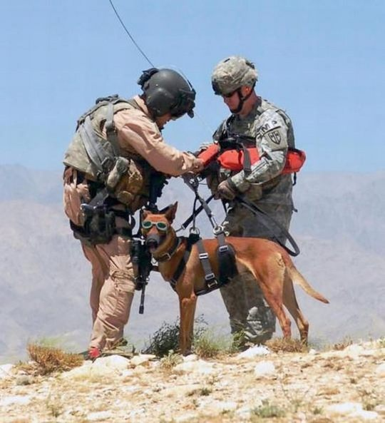 dogs_in_army_16