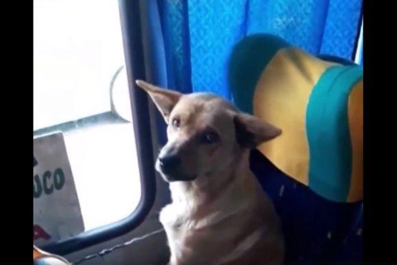 「今日も寒いですね~、ちょっと乗りますよ」 寒さを逃れてバスに乗り込んだ犬。運転手さんの配慮ですやりんこ(チリ)