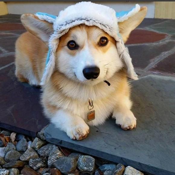 帽子をかぶったコーギーがあまりにもかわいかったので、コラ職人頑張る