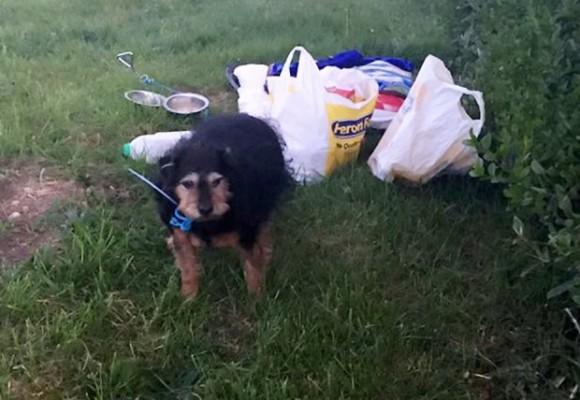 「俺に犬は必要ない」と書かれたメモと一緒に捨てられていた老犬。このひどい扱いに全英が怒り心頭