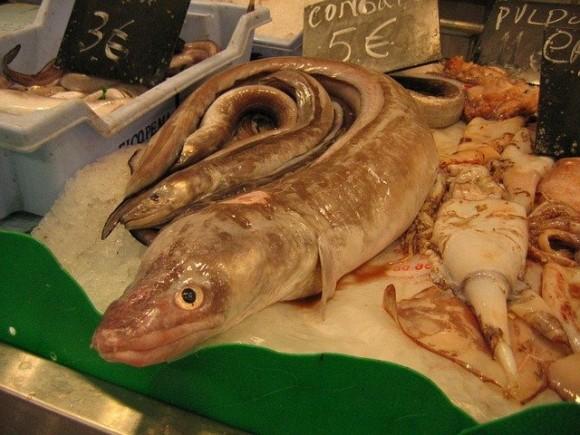 fish-15089_640_e