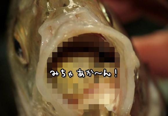 魚の口に寄生する、ウオノエの生態にズームイン!【閲覧注意】