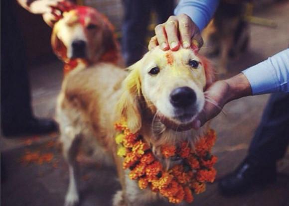 神の使いである犬たちが花飾りをつけ盛大に称えられるネパールの犬まつり「ククル・ティハール」