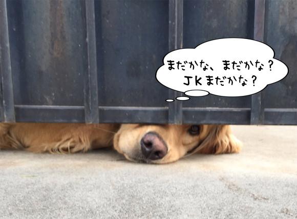 近所に住む女子高生の帰宅を待ちわびる犬の姿がかわいすぎた(アメリカ)