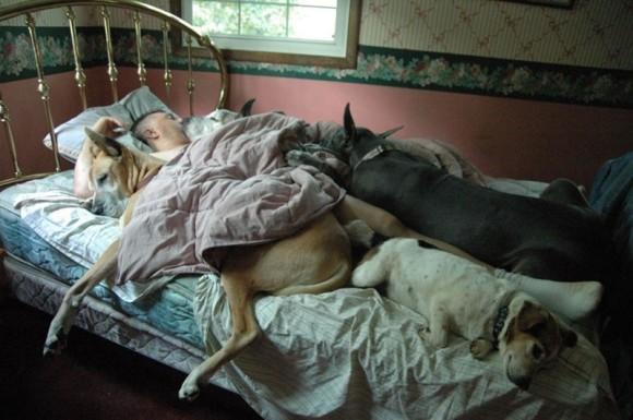 添い寝してくれるペットがいる多幸感ったら!