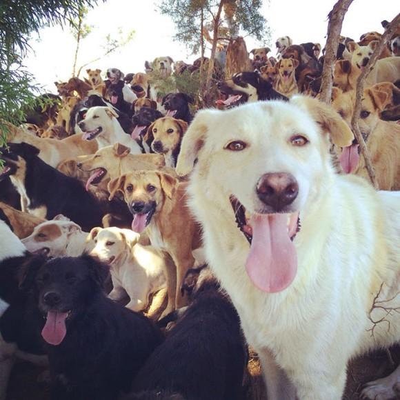 ここが犬の楽園か!コスタリカの広大な大地で暮らす900匹以上の保護犬たち