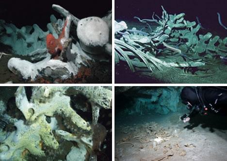 underwaterBones