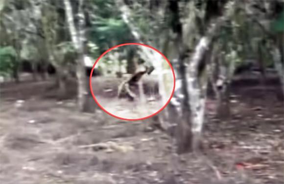 それどこの鎌倉JAPAN?日本の森で目撃されたというツッコミどころ満載のエイリアン映像