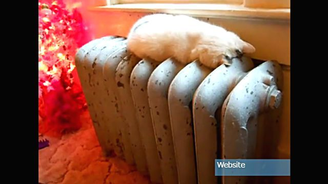 sleepingcat2