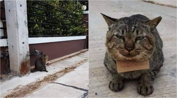 3日間行方をくらましていた猫が、借金を背負って帰ってきた!(タイ)