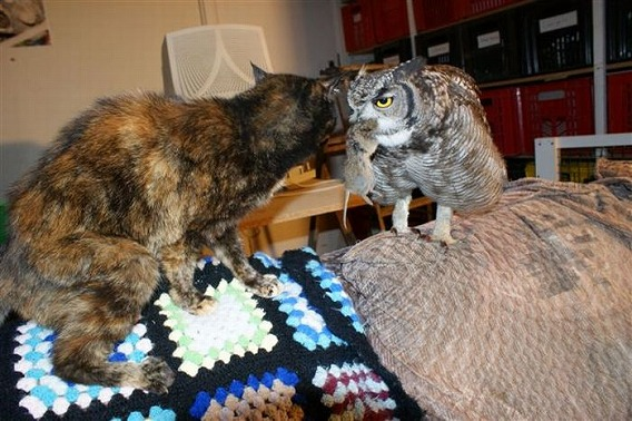 caring_owl_02