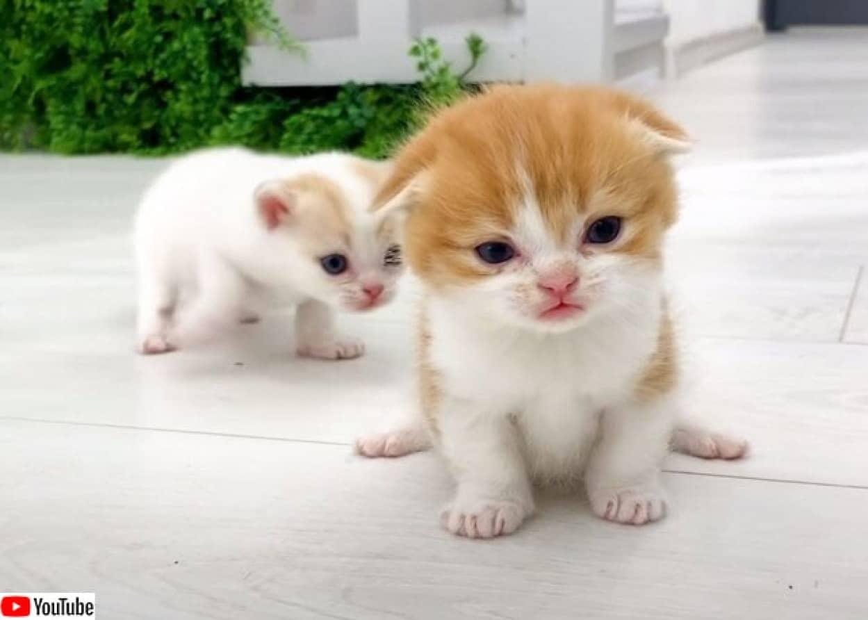 妹に走り方を教えようと必死の子猫のかわいさ