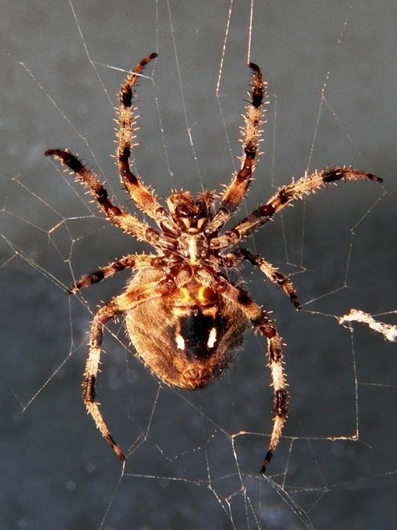 spider-640948_640_e