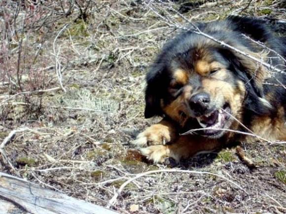 飼い主の為に命をなげうった、名犬メイソンの物語
