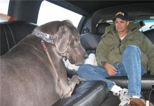 Worlds_Tallest_Dog_16