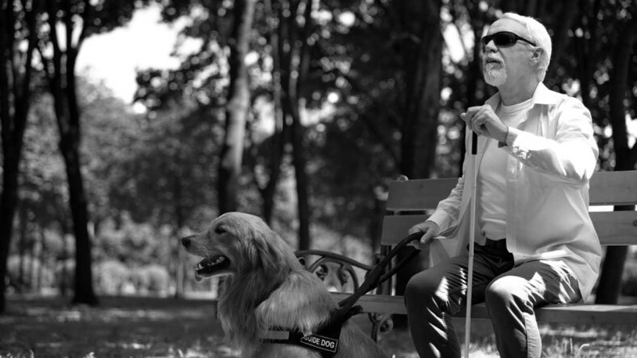 目が見えなくなっているのに盲目の飼い主を導き続けようとした盲導犬