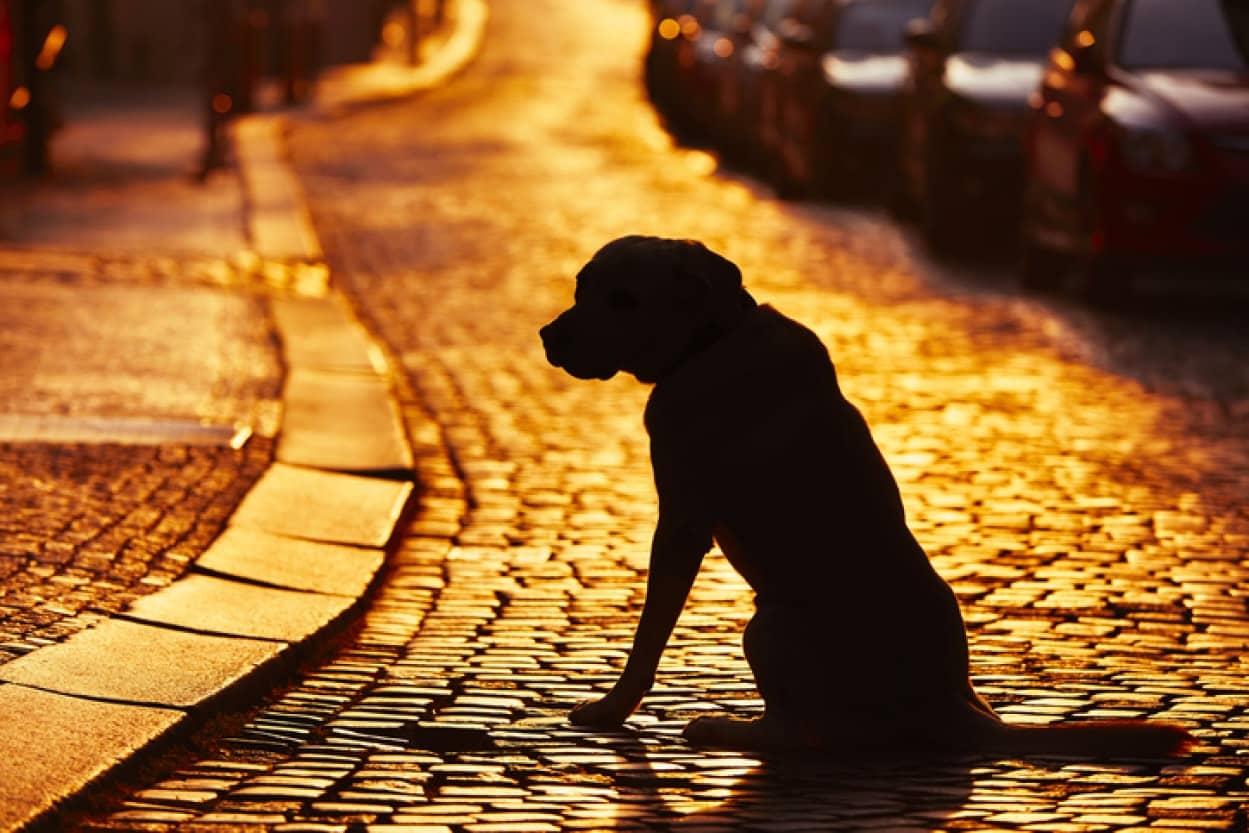 迷子になった犬が自力で飼い主の勤務先を探し出す