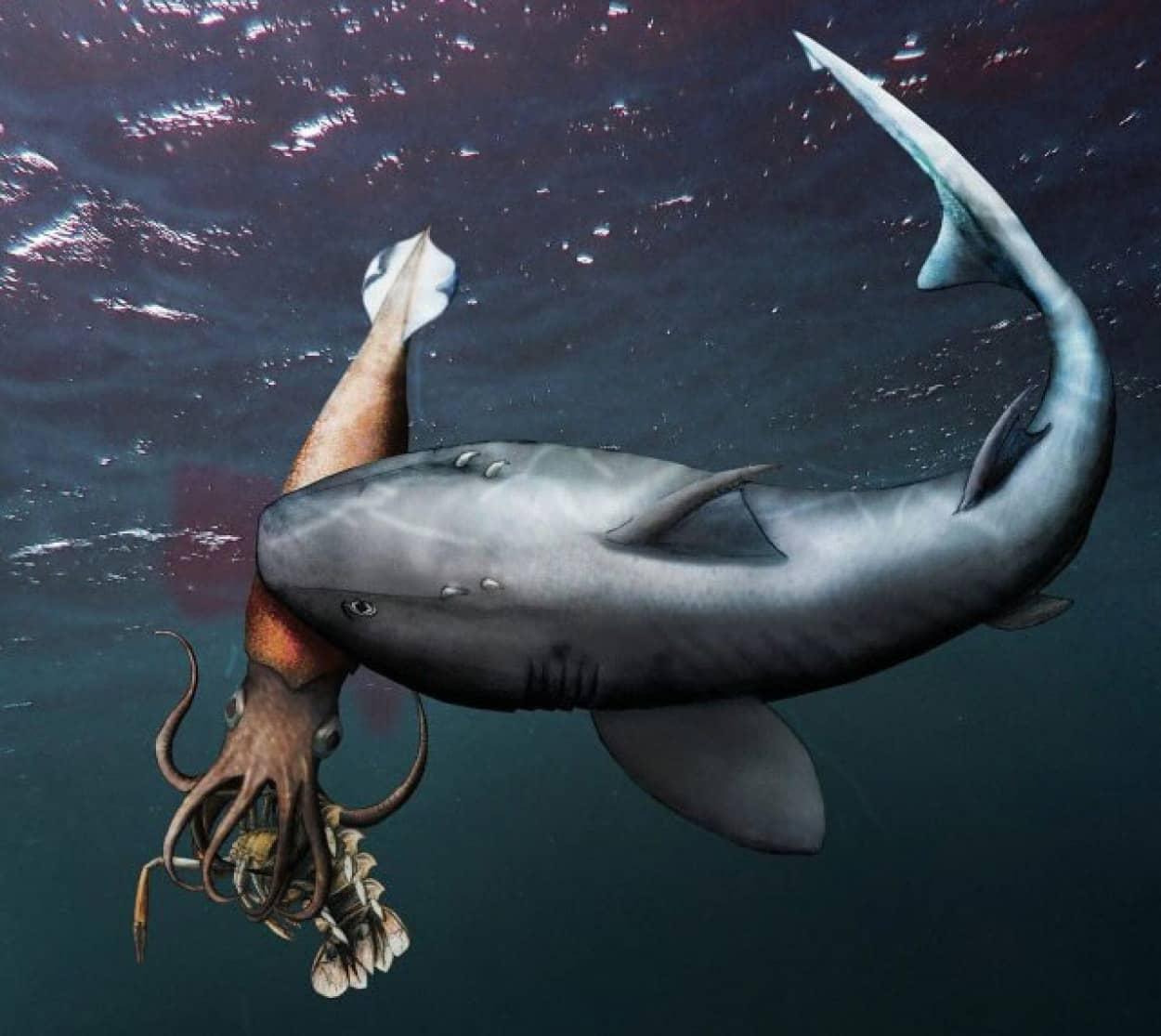エビを捕食中サメに食べられたイカの化石が発見される