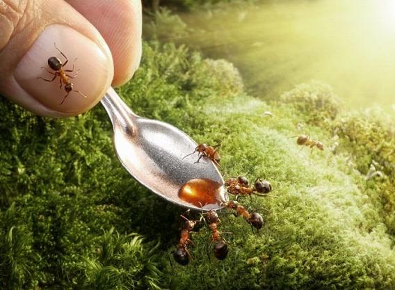 ants_08