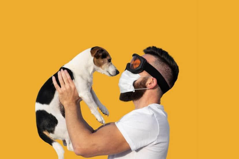 コロナウイルスの匂いを嗅ぎ分ける犬