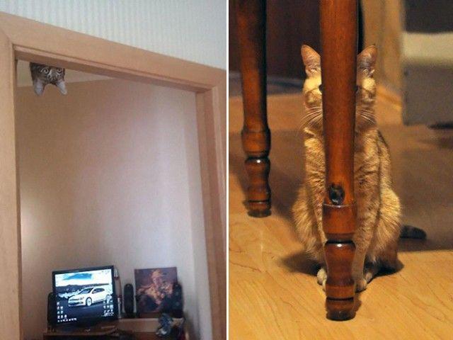 ninja-cat10_e