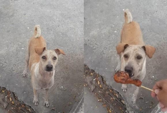 チキンをねだる犬にあげたところ、食べずに走り去っていく。後をついていくとそこには・・・