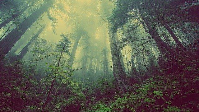 植物を使って森の中の遺体を探し出す方法