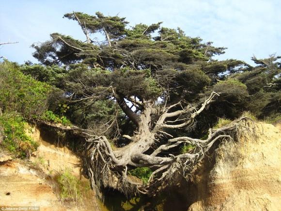 驚くべき生命力!引き裂かれた崖っぷちで踏ん張り続ける「生命の樹」(