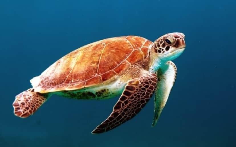 turtle-863336_640_e