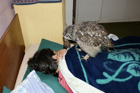 caring_owl_06