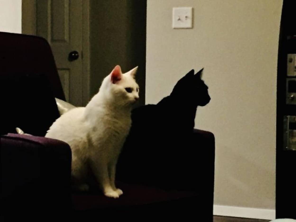 影に見えるのは黒猫