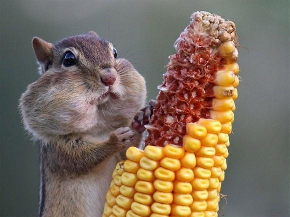 「食べる 動物」の画像検索結果