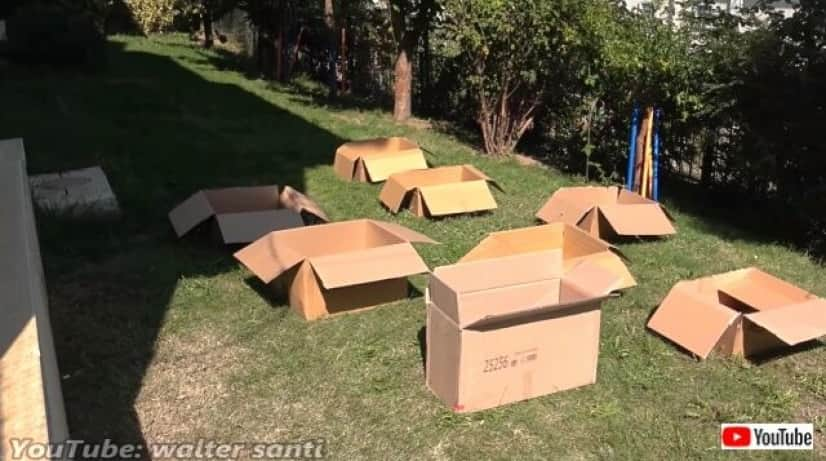 12cats8boxes3_640