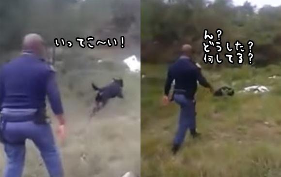 警察犬の訓練風景。犬が何かを捕えた!それを見た警察官のリアクションがマジドリフ(南アフリカ)