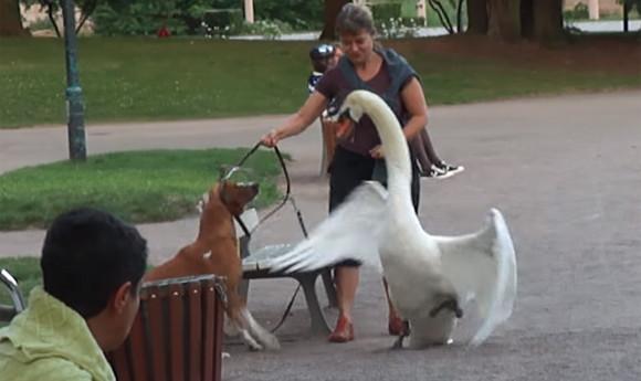 「お前は俺を怒らせた」の怖いやつ。白鳥パイセンのターゲットになってしまった犬と飼い主の場合