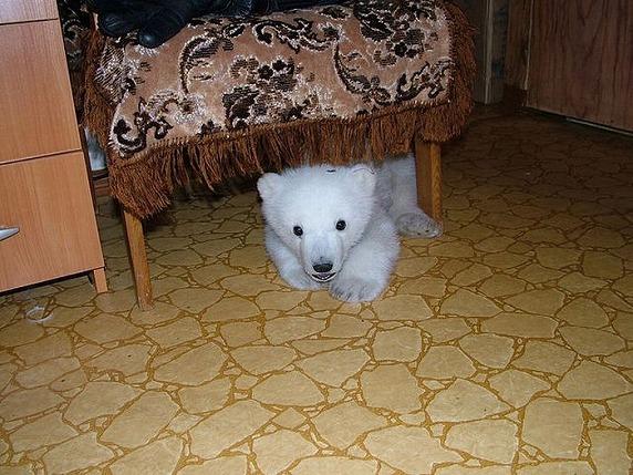 polarbearbabysaved-17