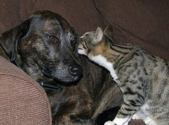 funny_cats_and_dogs_02