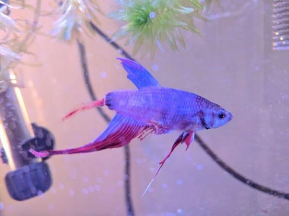 fish1_e