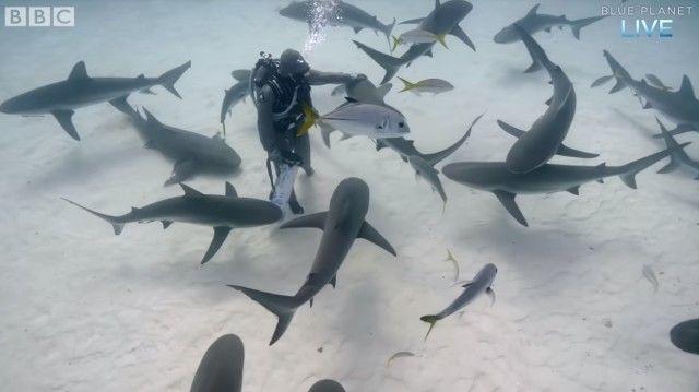 サメはやっぱり海のわんこだった?ダイバーになつきまくるバハマのサメたち
