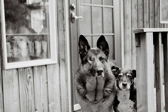 old_dogs_17