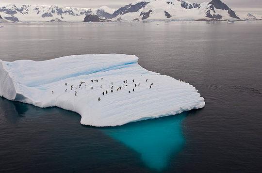 penguins_15