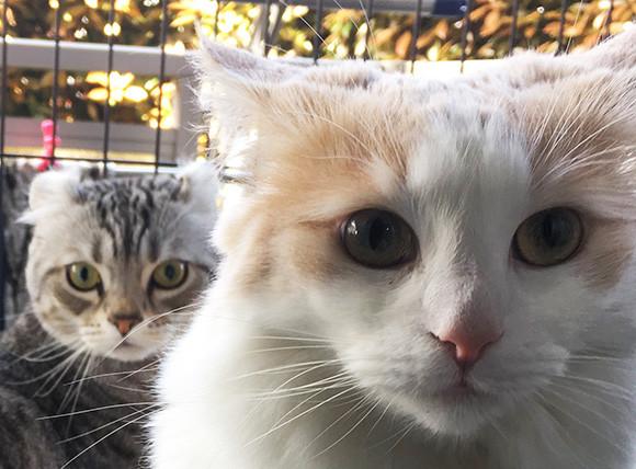 人間が猫を飼っているのではない。猫が人間を飼いならしているのだ(アメリカ人女性作家の考察)
