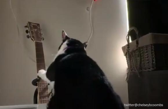 わいの魂の叫びを聴け!毎朝4時半になるとギターをかき鳴らし飼い主を起こす猫
