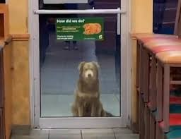 サンドウィッチ屋と犬