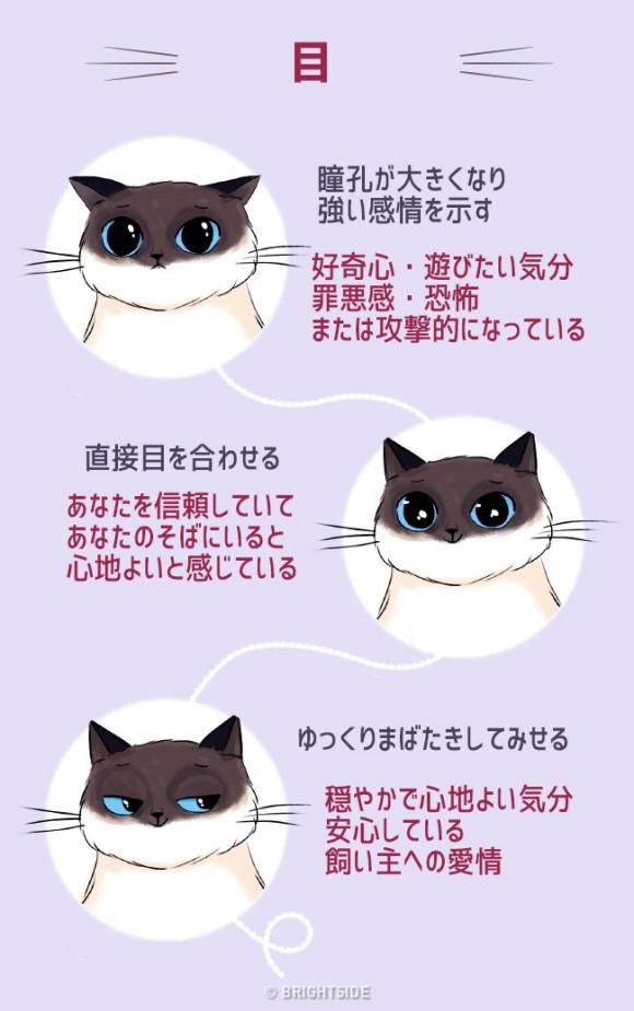しっぽ 震わせる 猫