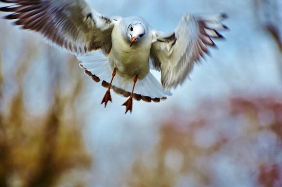 seagull-3125945_640_e