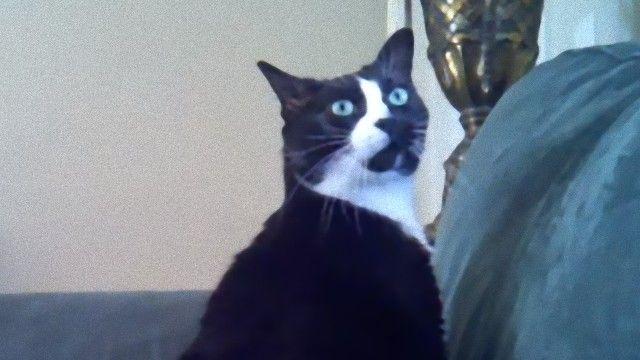 愛猫は耳が聞こえない。ではこうしよう。耳の聞こえない猫を起こす飼い主さんにほっこり