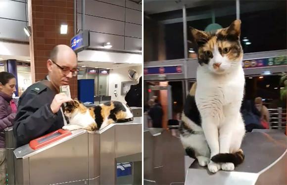 ここにタッチな。自発的に自動改札の案内係を務めている猫(イスラエル)