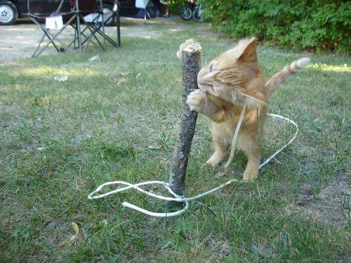 cats_44